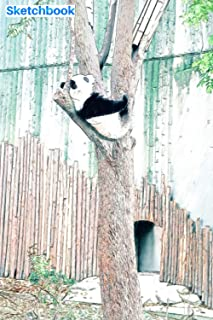 """Sketchbook: Panda sleeping on a tree in the forest: 6"""" x 9"""", 103 pages, For everyone: man, woman, children, teenagers and ..."""