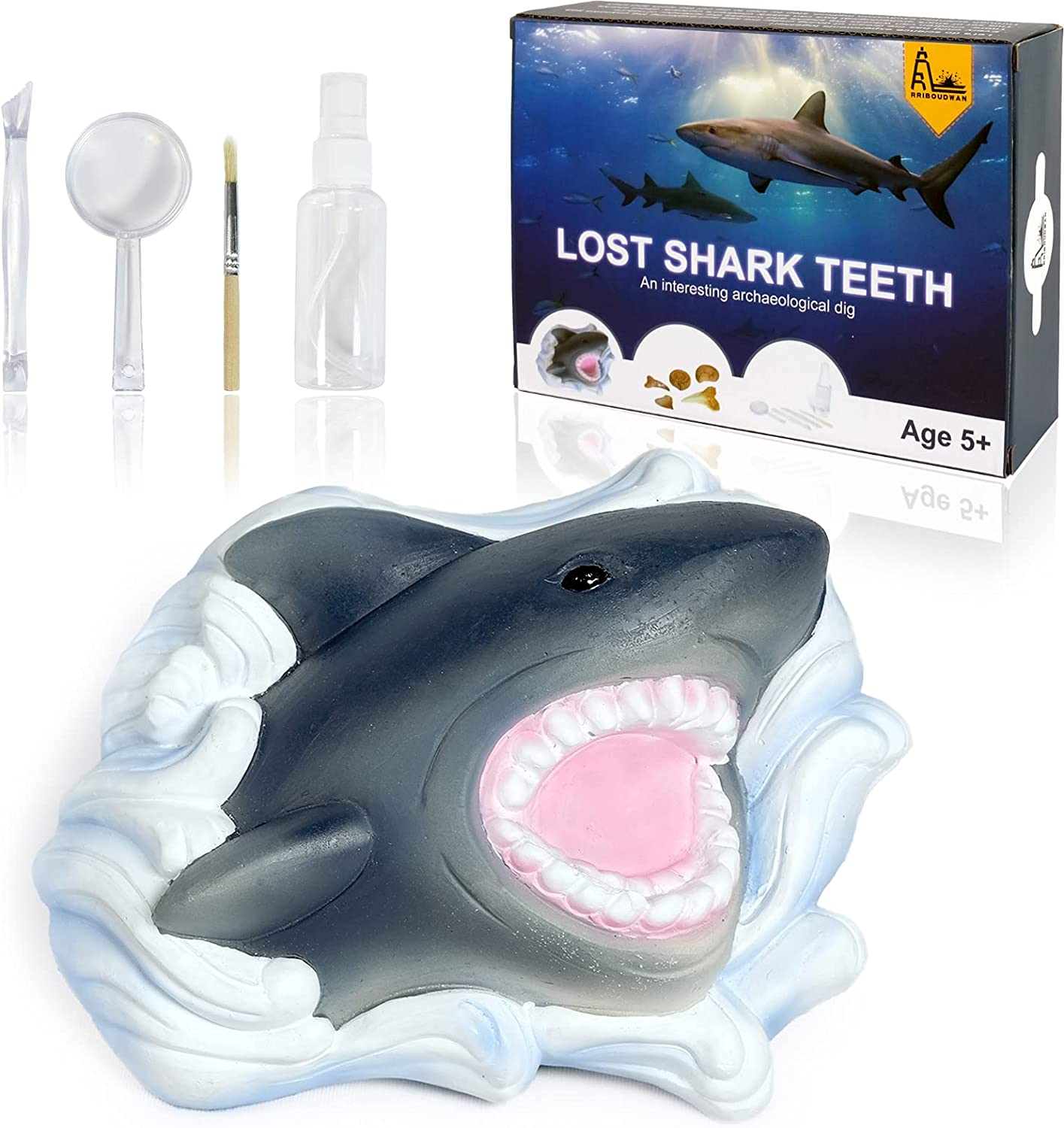 Cheap bargain RRIBOUDWAN Shark Gifts Tooth Dig Fossil Kit Excavation S