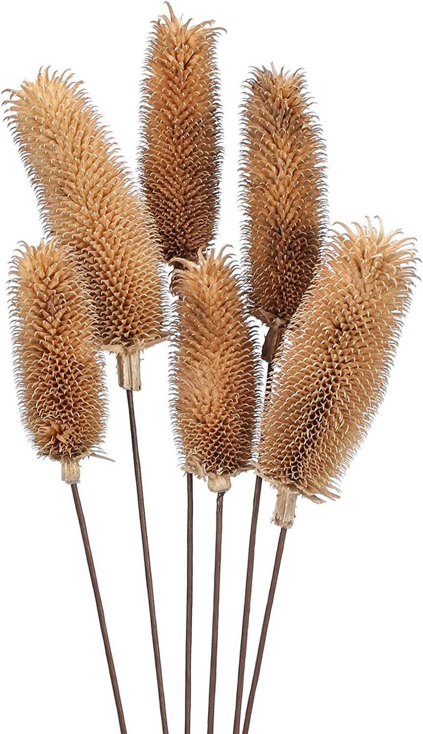 XYXCMOR 6Pcs Natural Dried Flowers Bouquet Dried Pine Cone Pompass Grass Branches Pine Flower Grass Bouquet Dried Plants for Decoration Vase Fillers Home Table Centerpieces Wedding Party Deco