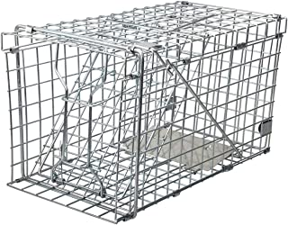 grey squirrel traps