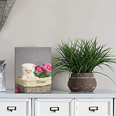 Yagqiny Cats in Flower Pots Pictures Display Picture Display for Table Home Decor Tabletop Frames Photo 8x6 Inch Picture Disp