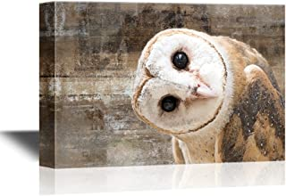 wall26 - Canvas Wall Art - Common Barn Owl (Tyto Albahead) Head Close Up - Gallery Wrap Modern Home Decor   Ready to Hang - 16x24 inches