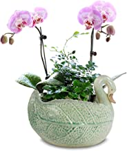Dahlia Decorative Swan Handmade Ceramic Succulent Planter/Plant Pot/Flower Pot/Bonsai Pot, Green