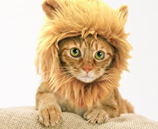 Prymal Lion Mane Cat/Dog Costume. This Pet Costume Turns Your Cat/Dog Into a Ferocious Lion King! (Please be Aware of Fake Products from Other Sellers).