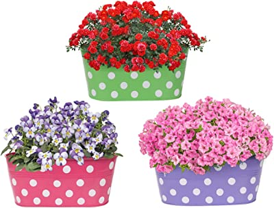 Amazon Brand - Solimo Rust-Free Hanging Planter - Set of 3 (Oval - Green, Pink, Purple)
