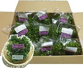 千葉県産 グリーンファームかずさオリジナルフリルレタス クリスピーフリル 生野菜 10袋入り1セット 鮮度保持フィルム包装 常温便