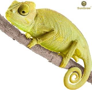 cheap chameleons