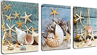 Best sea shells pictures Reviews