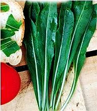 Roquette sauvage - Diplotaxis tenuifolia Avec substrat de culture dans un sac de levage facile /à manipuler SAFLAX Jardin dans le sac BIO 1500 graines
