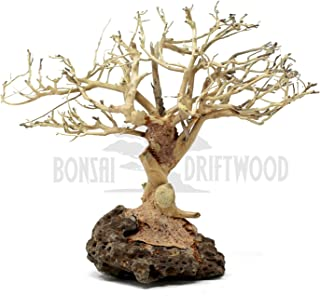 Best aquarium bogwood with plants Reviews