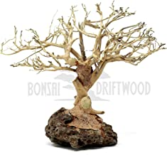 Bonsai Driftwood Random Pick Aquarium Decoration Tree, Moss Tree, Aquarium Driftwood Tree, Aquarium Tree (6 Inch Height) Natural, Handcrafted Fish Tank Decoration | Helps Balance pH