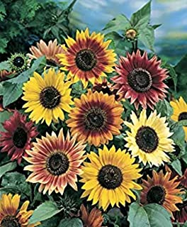 Sunflowers Mat - Grow Sun Flower Garden Flowers. Includes: (1) Pre-seeded  17