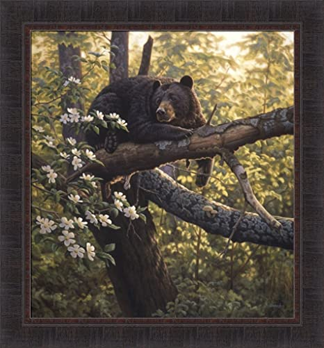 Amazon Com Longing For Apples By Greg Alexander 27x29 Bear Laying In A Blossoming Apple Tree Framed Art Print Wall Décor Framed Picture Posters Prints