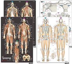 筋肉まるわかり+骨と関節まるわかりシートセット(2枚組)