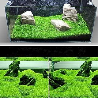 ZEROYOYO 1000 Kernels Bulk Aquarium Grass Mixed Seeds Water Aquatic Home Fish Tank Plant Decor