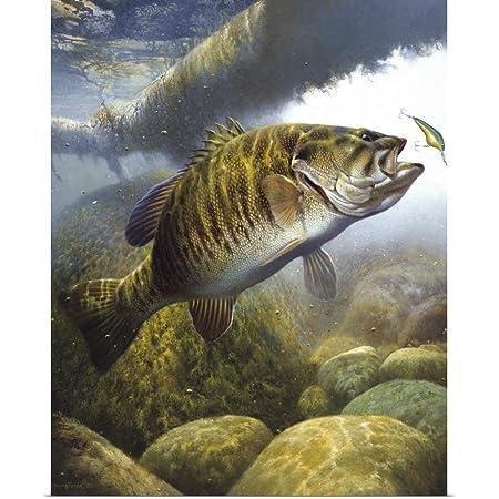 Bass Fishing Poster Largemouth Bass /& Smallmouth Bass