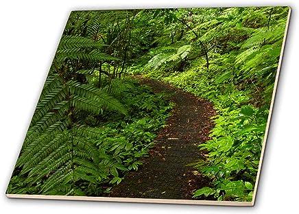 3dRose Danita Delimont - Auckland - Hunua Falls Loop Track,Hunua Rabges,Auckland,新西兰 - 瓷砖 (ct_248259) 白色 4-Inch-Ceramic ct_248259_1