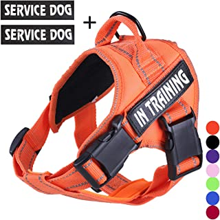 Best service dog stability harness Reviews