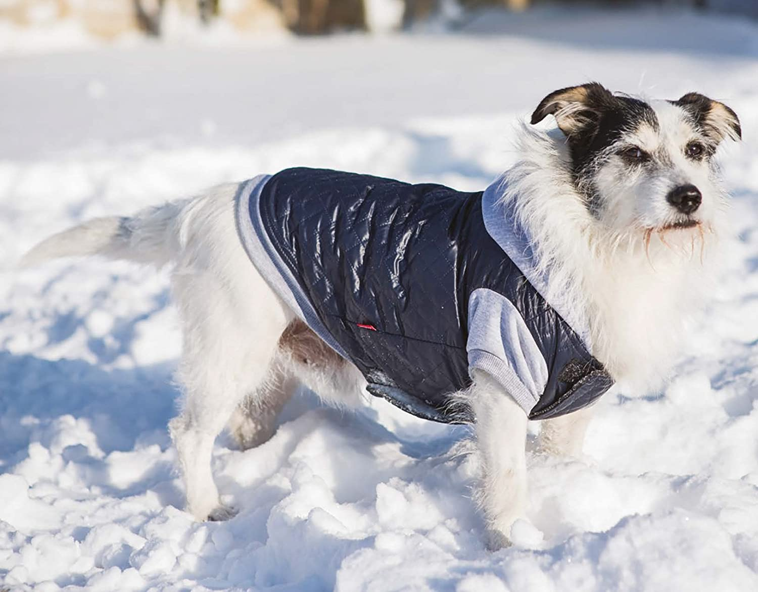 Dogs Ranking TOP2 My Love Cold Weather Bargain sale Hoodie Blue Sizes 6 Jacket Coat