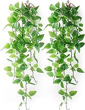 Amazon Co Uk Wall Plants