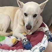 Pet Heroic 6 tama/ños Calcetines Antideslizantes para Perros Gatos Control de tracci/ón para el Uso en Interiores Protectores de Patas para Perros Gatos Ajuste para Perros Extra peque/ños a Grandes