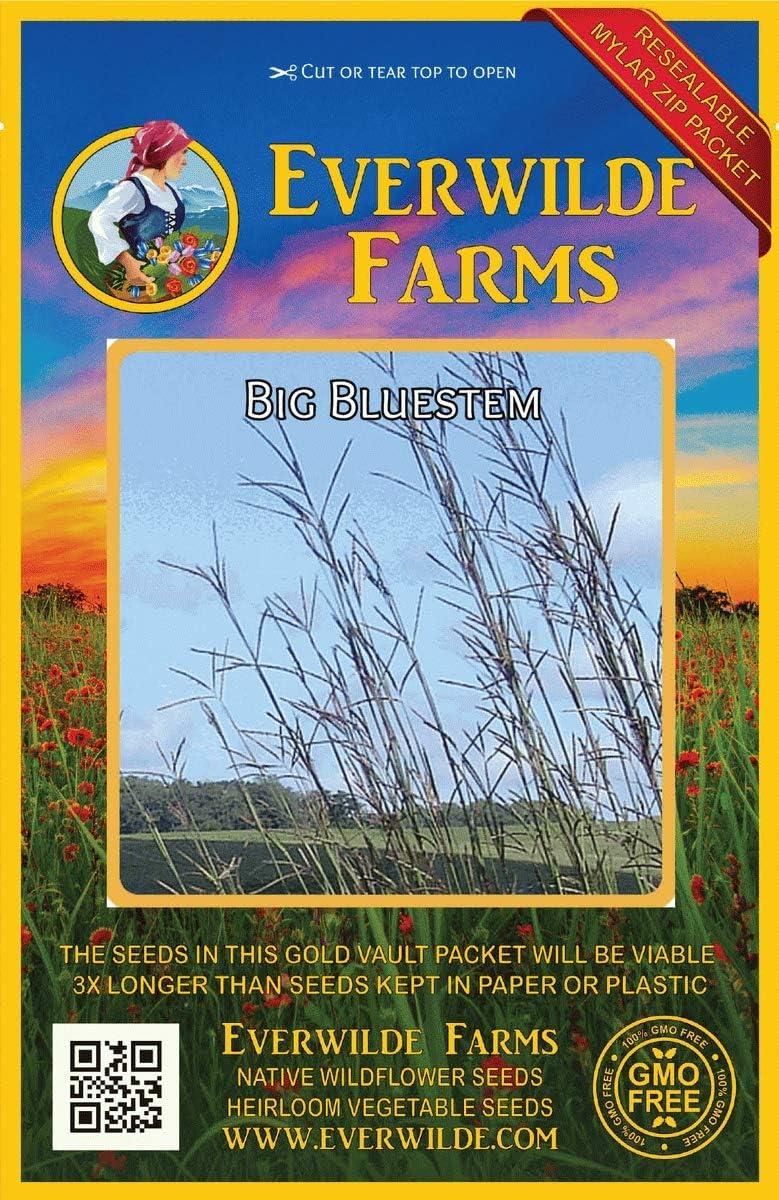 Everwilde Farms - 1000 Popular Direct stock discount brand Big Bluestem Grass Native Seeds Gold Va