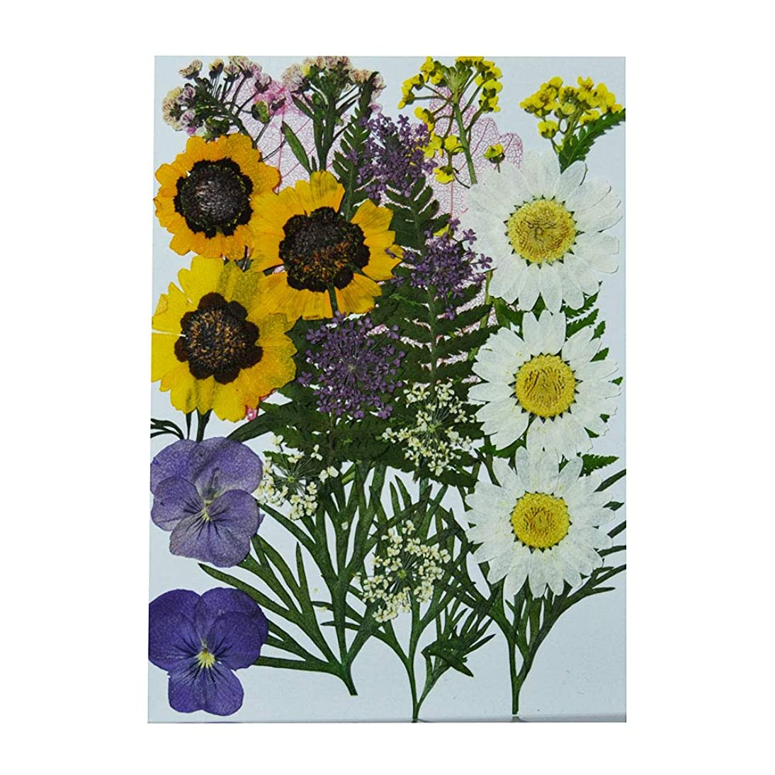 Uokwiwi Real Dried Pressed Flowers Assorted Colorful Daisies Leaves Hydrangeas for Art Craft DIY - 1 Pack Size 16
