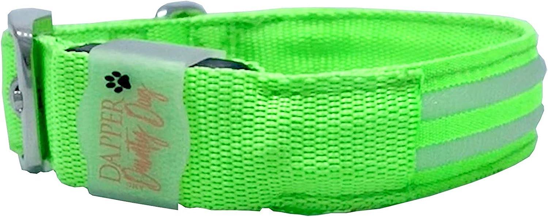 Dapper & Dainty Dog LED Leash & Collar Set (L, Green)
