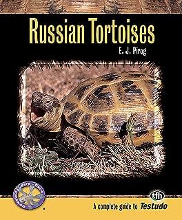 happy birthday tortoise