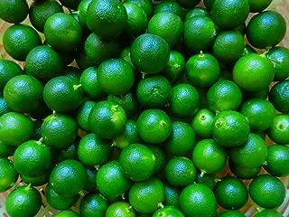 calamansi calamondin Lime Seeds 15 organically Grown!
