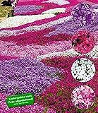 BALDUR-Garten Phlox-Mix'Flowers of the Sea',8 Pflanzen