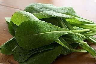 'Komatsuna (Japanese Mustard Spinach)' 1000 Seeds ~Cold hearty, Heat tolerant !
