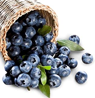 Delite Blueberry 300+ Seeds + 1 Free Plant Markers - Excellent Quality Berries