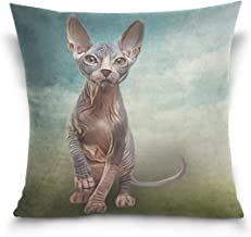 Mydaily Sphynx Kitten Cat Square Throw Pillow Case Cotton Velvet Cushion Cover 18x18 inch