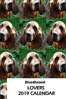 Bloodhound Lovers 2019 Calendar