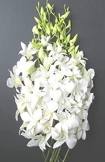 Best dendrobium orchid bouquet Reviews