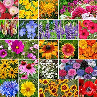Burst of Bloom Annual & Perennial Wildflower Seed Mix - 1/4 Pound, Mixed