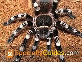 Best white knee tarantula care Reviews