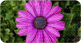 Bath Tub Shower Mat Non-Slip Purple Osteospermum Daisy Flower Bathtub Mats with Suction Cups and Drain Holes Bathroom Soft...