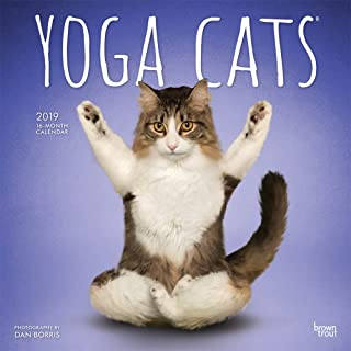 Yoga Cats 2019 12 x 12 Inch Monthly Square Wall Calendar, Animals Humor Cat (Multilingual Edition)