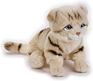Lelly - National Geographic Scottish Fold Cat, Sitting