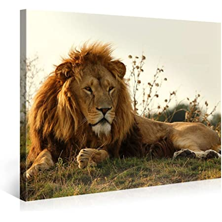 Amazon Com Large Canvas Print Wall Art Majestic Lion 40x30 Inch Animal Canvas Picture Stretched On A Wooden Frame Giclee Canvas Printing Hanging Wall Deco Picture E3610 Posters Prints