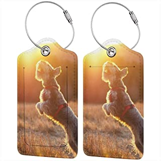 Animal Ball Dog Jump Schnauzer Sun Luggage Tags Suitcase Labels Bag Travel Accessories Set of 2