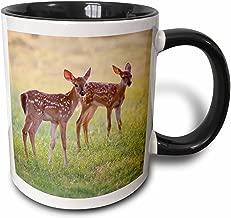 "3dRose mug_191374_4""White-Tailed Deer Odocoileus Virginians Fawn Texas Usa"" Two Tone Mug, 11 oz, Multicolor"