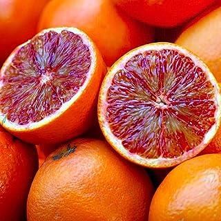 ブラッドオレンジ 8号ルートポット大苗【品種で選べる果樹苗木/接木苗/1個売り】ブラッドオレンジは、すっきりした酸味と豊かな風味、インパクトのある真っ赤な果実が特徴。トマトジュースのように真っ赤なブラッドオレンジジュースで有名です。イタリア地中...