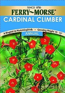 Ferry-Morse Cardinal Climber Seeds (Annual)