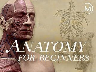 Anatomy for Beginners: Season 1