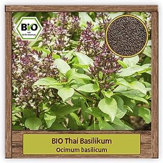 BIO Thai Basilikum Samen Strauchbasilikum Ocimum basilicum Thaibasilikum Kräutersamen