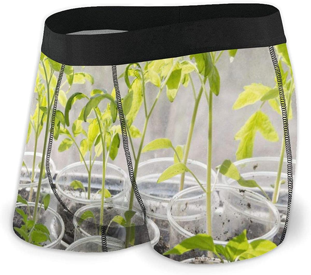 Mens Boxer Briefs Seedlings Tomato in Plastic Cups Breathable Underwear