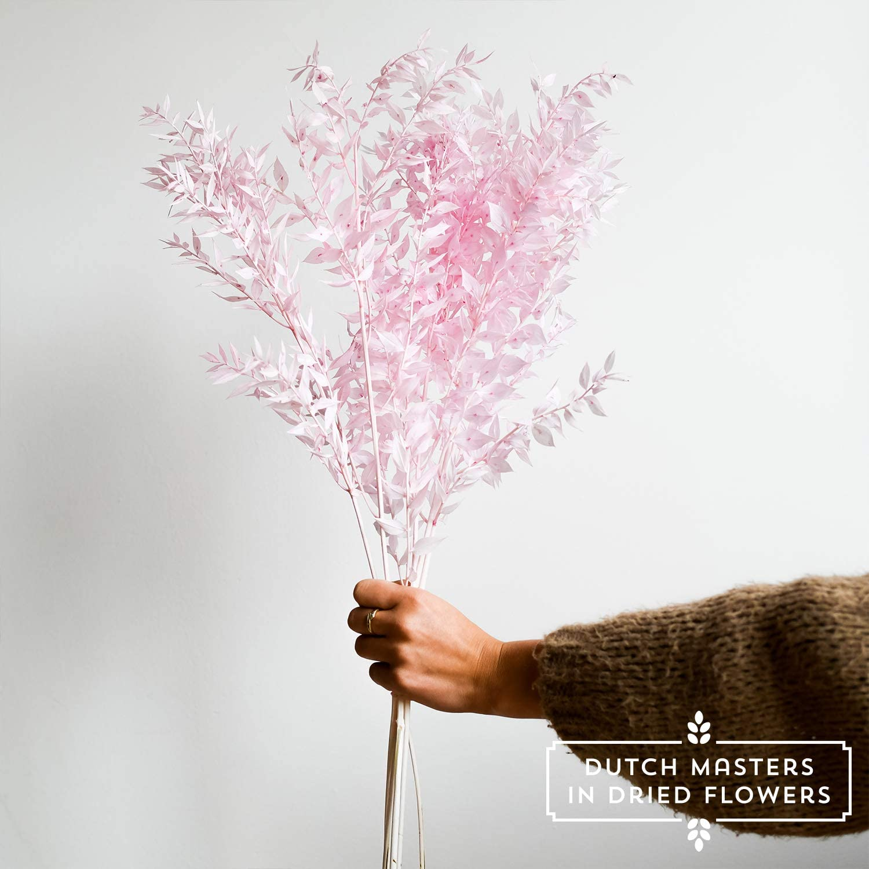 Trockenblumenstrau/ß M/äusedorn | Getrocknete Blumen in Orange Pres Ruscus 75 cm Deko Strau/ß aus M/äusedorn